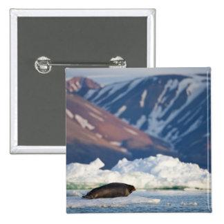 Norway, Svalbard, Spitsbergen Island, Bearded 2 Pinback Button