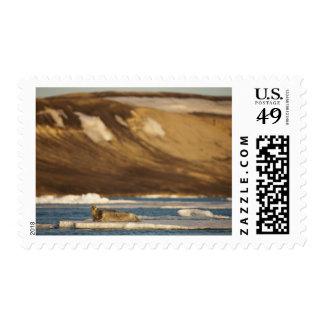 Norway, Svalbard, Spitsbergen Island, Bearded Stamp