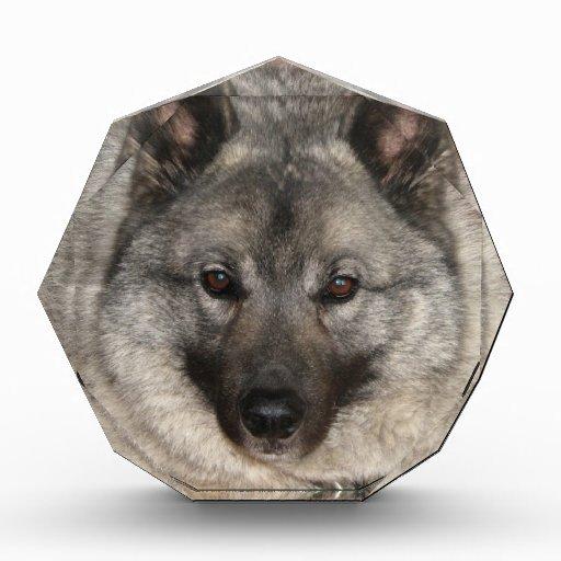 Norwegian Elkhound Awards