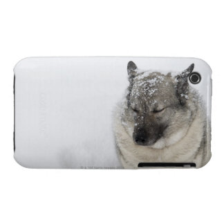 Norwegian Elkhound Case-Mate iPhone 3 Case