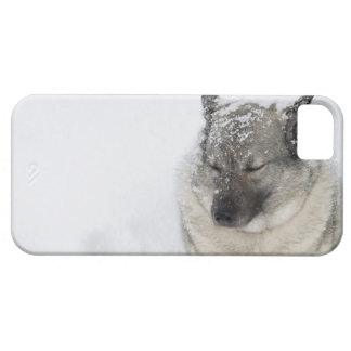 Norwegian Elkhound iPhone SE/5/5s Case