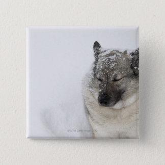 Norwegian Elkhound Pinback Button