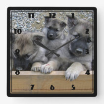 Norwegian Elkhound Puppies Square Wall Clock