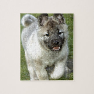 Norwegian_Elkhound_puppy Jigsaw Puzzles