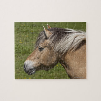 Norwegian Fjord Horse Jigsaw Puzzle