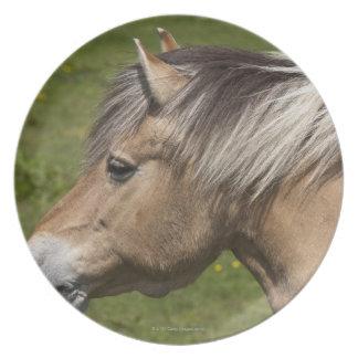 Norwegian Fjord Horse Plates