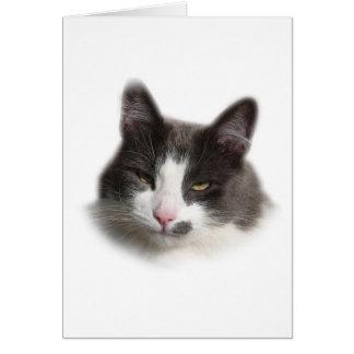 Norwegian Forest Cat Card