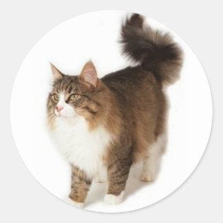 Norwegian Forest Cat Classic Round Sticker