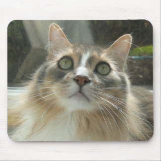 Norwegian Forest Cat grey and white Mouse Pad