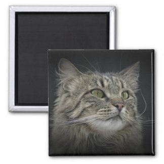 Norwegian Forest cat portrait Magnet