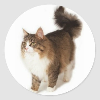 Norwegian Forest Cat Round Sticker