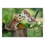 Norwegian Forest kittens Card