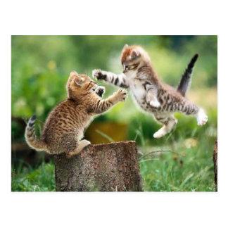 Norwegian Forest kittens Postcard
