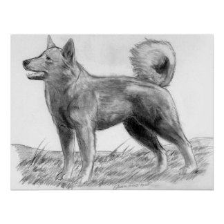 Norwegian Lundehund Dog Portrait Poster