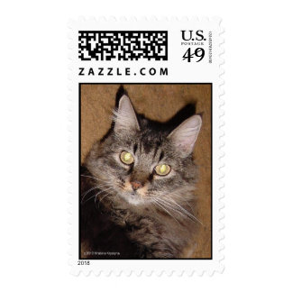 NORWEIGIAN FOREST CAT POSTAGE STAMP