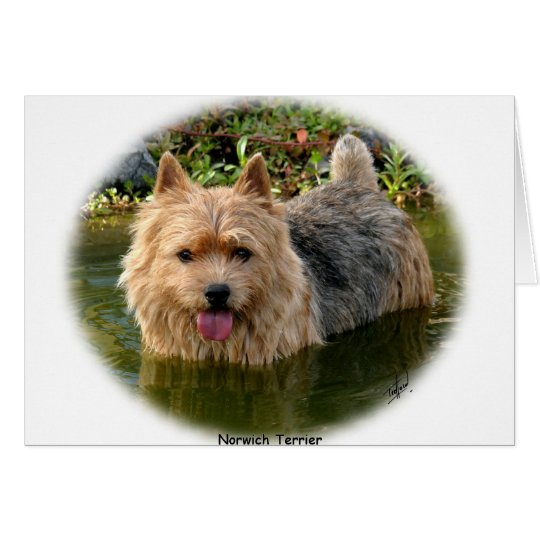 Norwich Terrier 9Y235D-087 Card