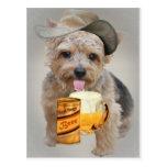Norwich Terrier comparte una cerveza Postales