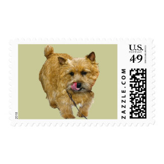 Norwich Terrier Postage