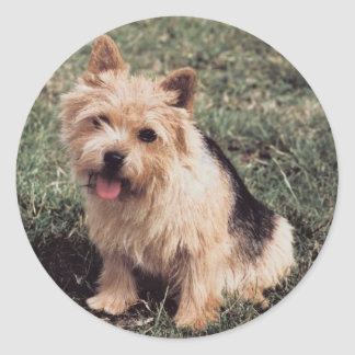 Norwich Terrier Sticker