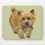 Norwich Terrier Tapete De Raton