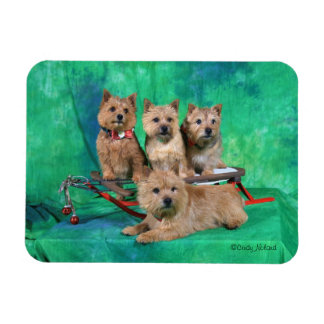 Norwich Terriers Holiday Design magnet