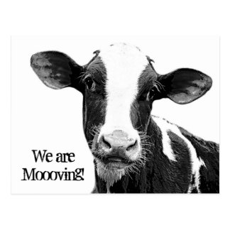 ¡Nos estamos moviendo! Cambio de Moooving de vaca Tarjetas Postales
