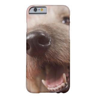 Nose of dog barely there iPhone 6 case