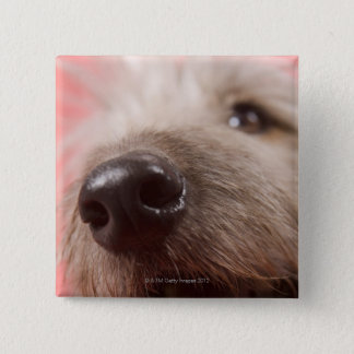 Nose of dog button