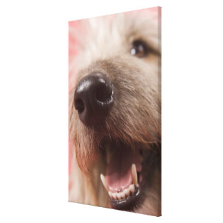 Nose of dog canvas print