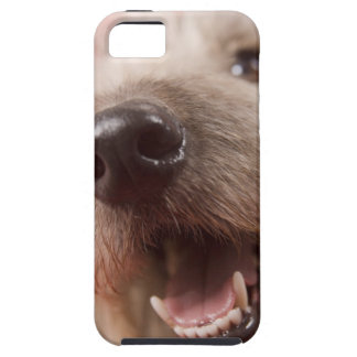 Nose of dog iPhone 5 covers