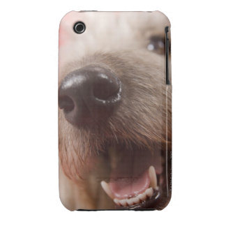 Nose of dog iPhone 3 covers