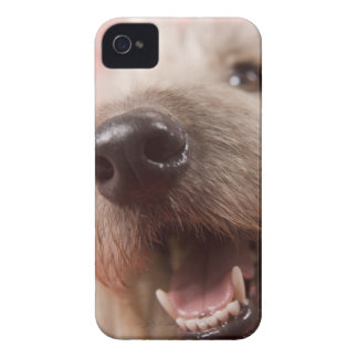 Nose of dog iPhone 4 Case-Mate case