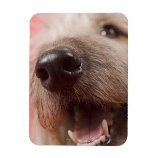 Nose of dog vinyl magnets