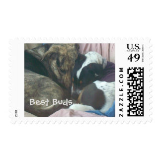 Nose To Nose Postage