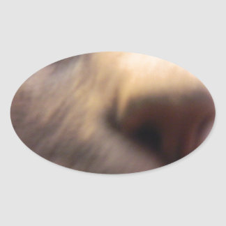 nosey cat oval sticker