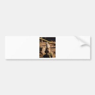 nosey meerkat bumper sticker