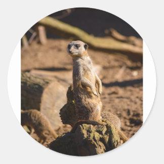 nosey meerkat classic round sticker