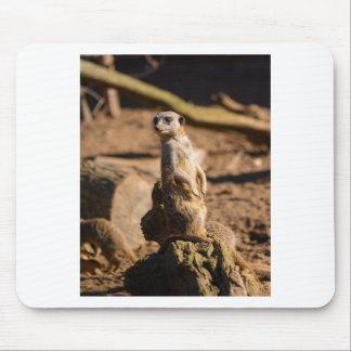 nosey meerkat mouse pad