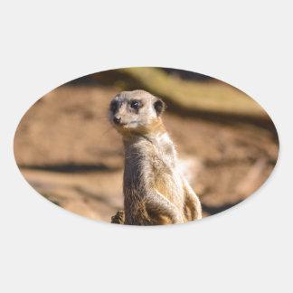 nosey meerkat oval sticker