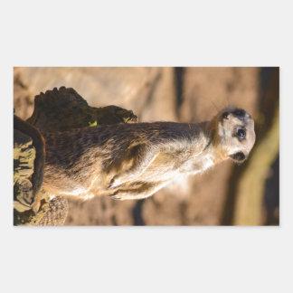 nosey meerkat rectangular sticker