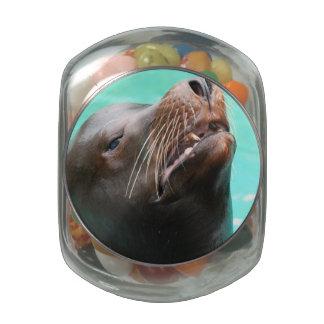 Nosey Sea Lion Glass Candy Jar