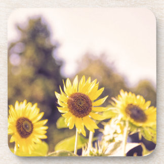 Nostalgic sunflower field beverage coaster