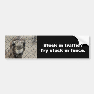 Nosy camel bumper sticker
