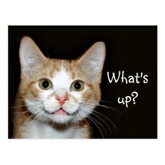 Nosy cat postcard