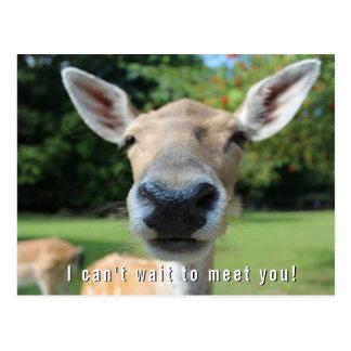 Nosy Deer Can't Wait to Meet You Teacher Note Postcard