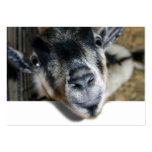 Nosy Goat Looking Out Business Card Template