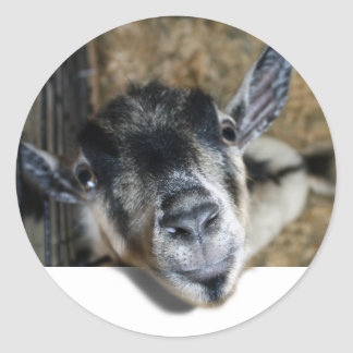 Nosy Goat Looking Out Classic Round Sticker