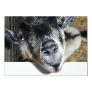 Nosy Goat Looking Out Personalized Invitations