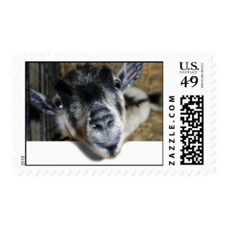Nosy Goat Looking Out Postage