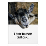 Nosy Goat Looking Up - Birthday Greeting Card